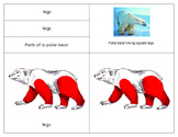#montessorimonday Parts of the Polar bear: Super Bundle