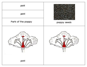 Parts of the Poppy : Simple Three Part Nomenclature