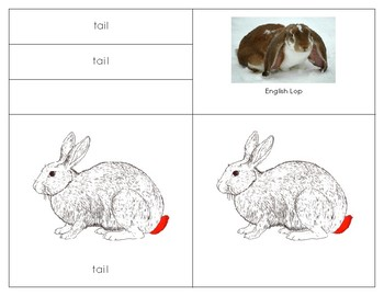 Parts of the Rabbit
