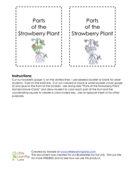 Parts of the Strawberry Plant Booklet