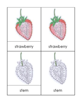 Parts of the Strawberry (SIMPLIFIED) Nomenclature Cards
