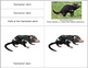 Australia:Parts of the Tasmanian Devil