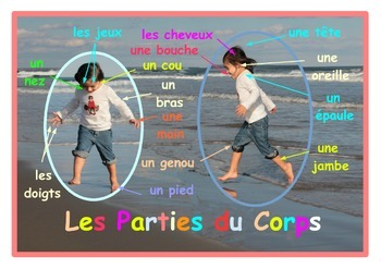 Parts of the body Poster  in French . A3 size