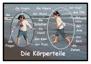 Parts of the body Poster in German . A3 size