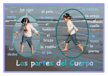 Parts of the body Poster  in Spanish . A3 size