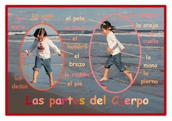 Parts of the body Poster  in Spanish. A3 size