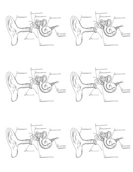 Parts of the ear reproducib... by Mr W's Sixth Grade ...