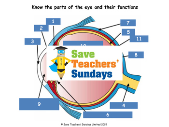 Parts of the eye Lesson plan, Worksheet and Plenary / Quiz
