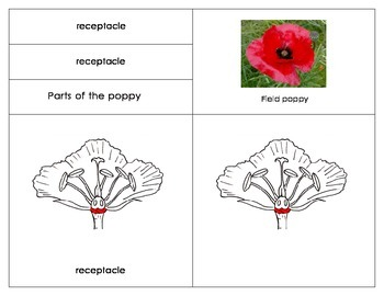 Parts of the Field Poppy