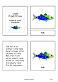 Parts of the fish (Osteichthyes) - Montessori nomenclature cards