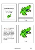 Parts of the frog (Amphibia) - Montessori nomenclature cards