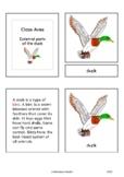 Parts of the bird (Aves) - Montessori nomenclature cards