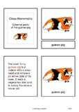 Parts of the guinea pig (Mammalia) - Montessori nomenclatu
