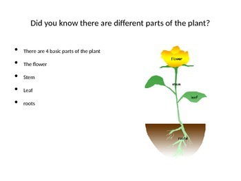 Parts of the plant power point