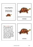 Parts of the tortoise (Reptilia) - Montessori nomenclature cards