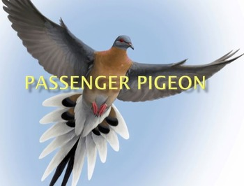 Passenger Pigeon - Extinct - Power Point information facts history pictures