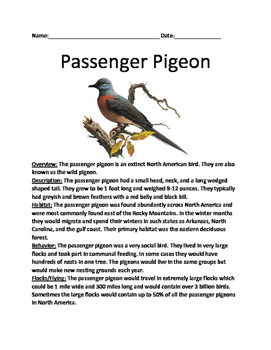 Passenger Pigeon - extinct informational article facts lesson questions vocab