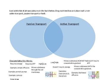 Passive & Active Transport Digital Venn Diagram