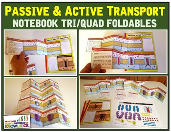Passive, Active Transport , Osmosis, and Osmoregulation TRI/QUAD FOLDS