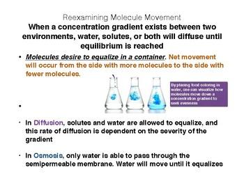 Passive Diffusion: Osmosis and Diffusion