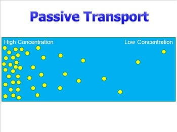 Passive Transport (Diffusion) PowerPoint