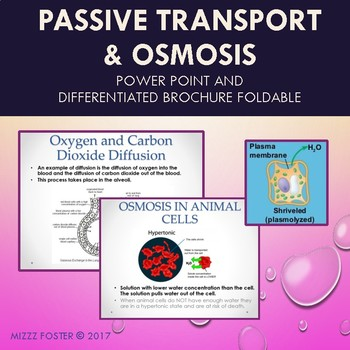 Passive Transport and Osmosis Power point & Differentiated Brochure for INB