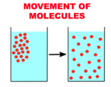 Passive and Active Transport - Diffusion & Osmosis (Editable)