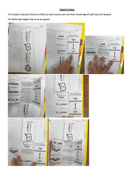 Passive and Active Transport Interactive notebook activity