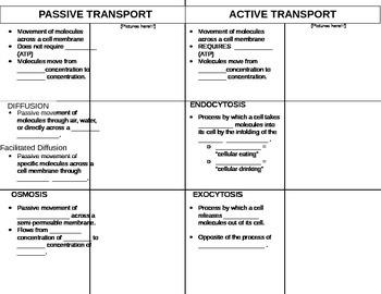 Passive vs. Active Transport