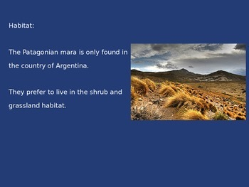 Patagonia Mara - Power Point - Information Pictures Facts