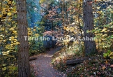 Path with Fall Leaves Stock Photo #227