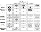 Pathogens Top Down Chart / Concept Map