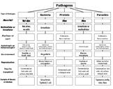 Pathogens Top Down Chart / Concept Map