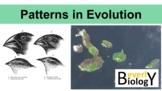 Patterns in Evolution (Divergent & Convergent evolution, Coevolution) PowerPoint