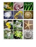 Patterns in Nature - Montessori sorting cards Printable