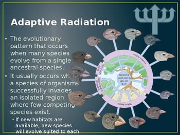 Patterns of Evolution Powerpoint