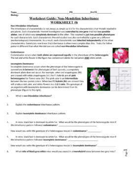 Patterns Of Inheritance Chapter 9 Packet Answers