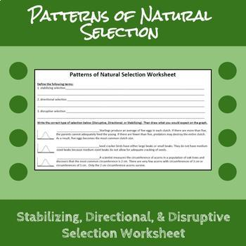 Patterns of Natural Selection Worksheet