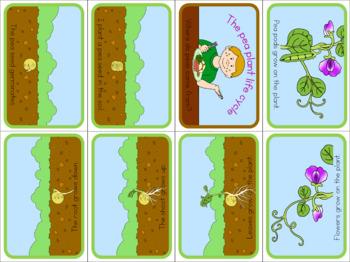 Pea life cycle bundle