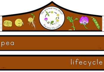 Pea life cycle crown
