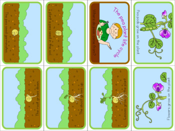 Pea life cycle mini book (simplified version)