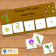 Pea life cycle sequencing activity worksheet