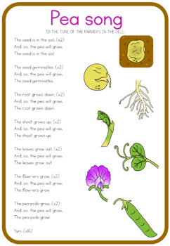 Pea life cycle song