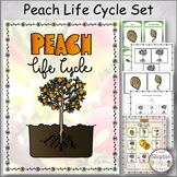 Peach Life Cycle Set