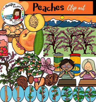 Peaches clip art