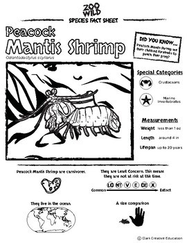 Peacock Mantis Shrimp -- 10 Resources -- Coloring Pages, Reading & Activities