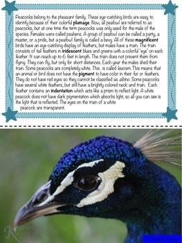 Peacocks: Non-Fiction Literacy Center or Close Reading Pocket Folders