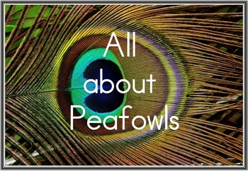 Peafowls/Peacocks - Flash Cards/Posters