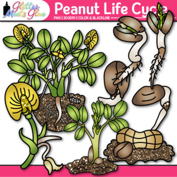 Peanut Life Cycle Clip Art: Plant Group Graphics {Glitter Meets Glue}