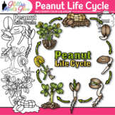 Peanut Life Cycle Clipart: Plant Group Graphics {Glitter Meets Glue}